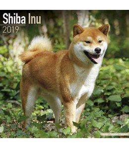 Avonside Shiba Inu Kalender 2019
