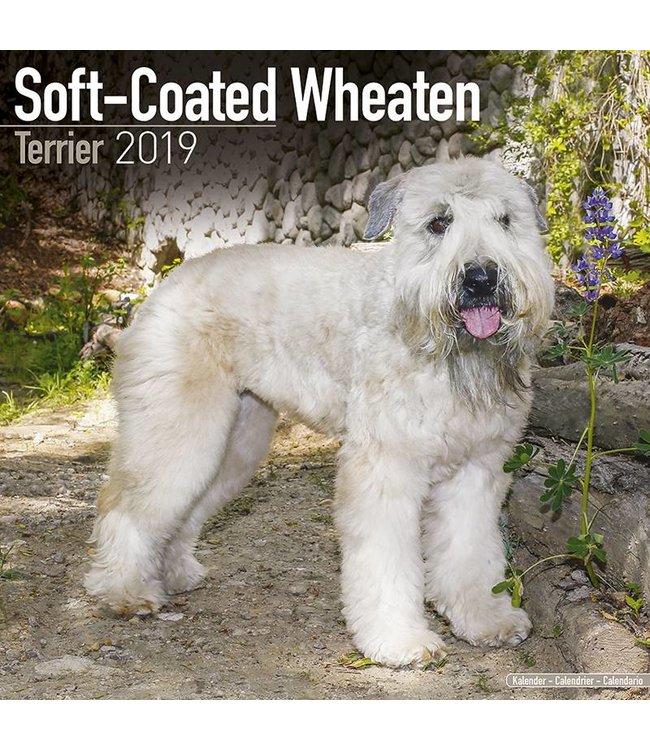 Avonside Softcoated Wheaten Terrier Kalender 2019 Avonside