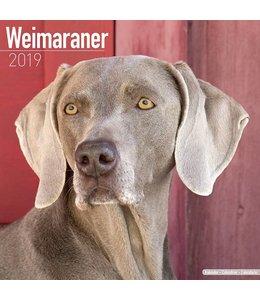 Avonside Weimaraner Kalender 2019