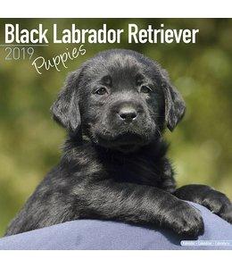 Avonside Labrador Retriever Zwart Puppies Kalender 2019