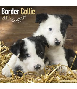 Avonside Border Collie Kalender Puppies 2019