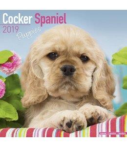 Avonside Cocker Spaniel Kalender Puppies 2019