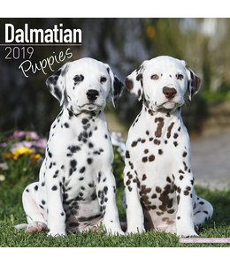 Avonside Dalmatier Kalender Puppies 2019