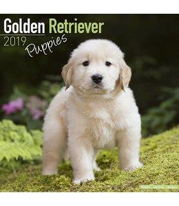 Avonside Golden Retriever Kalender Puppies 2019