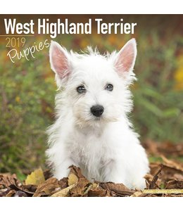 Avonside West Highland White Terrier Puppies Kalender 2019