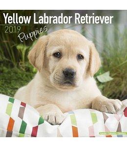 Avonside Labrador Retriever Blond Puppies Kalender 2019