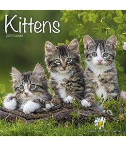 Avonside Kittens Kalender 2019