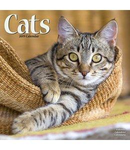Avonside Katten Kalender 2019