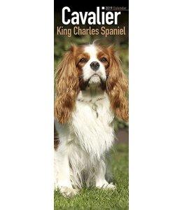 Avonside Cavalier King Charles Spaniel Kalender 2019 Slimline