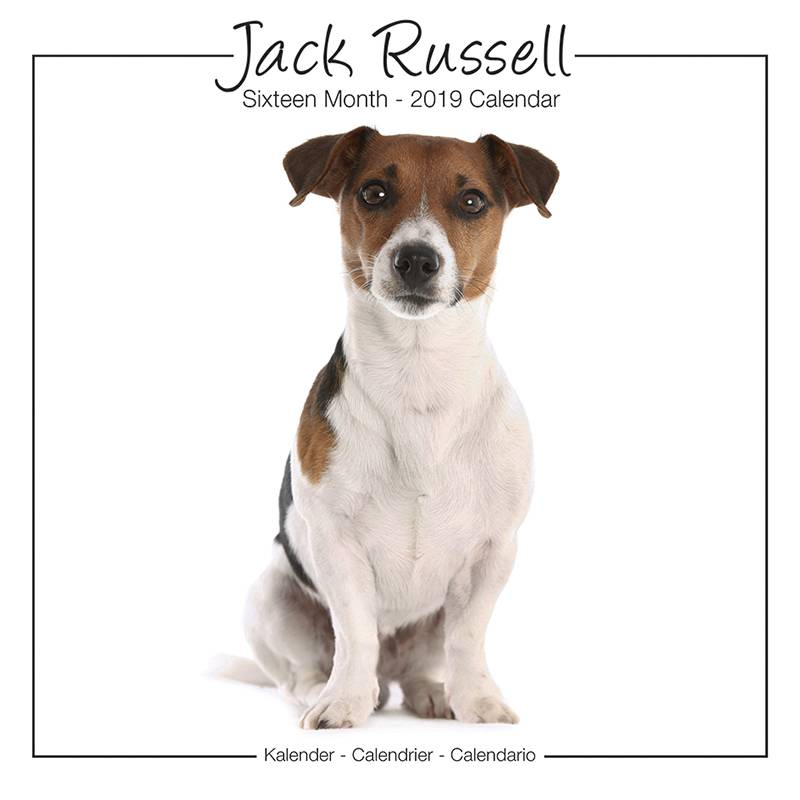 Jack Russell Terrier Kalender Studio Range 2019