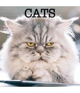 TL Turner Cats Kalender 2019