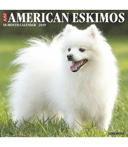 Willow Creek American Eskimo Kalender 2019