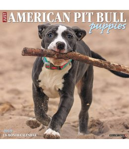 Willow Creek American Pit Bull Terrier Puppies Kalender 2019