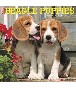Willow Creek Beagle Puppies Kalender 2019