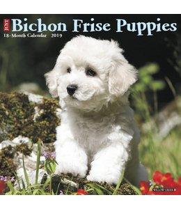 Willow Creek Bichon Frise Puppies Kalender 2019