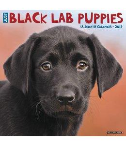 Willow Creek Labrador Retriever Zwart Puppies Kalender 2019