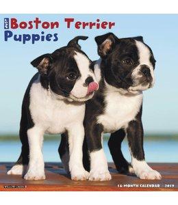 Willow Creek Boston Terrier Puppies Kalender 2019