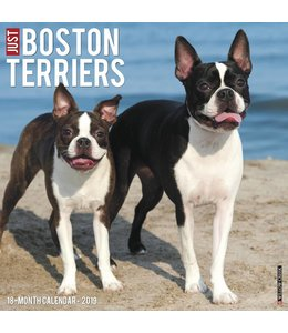 Willow Creek Boston Terrier Kalender 2019