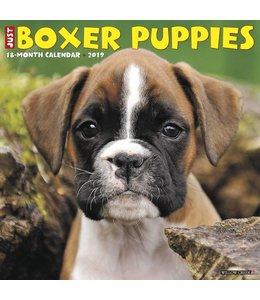 Willow Creek Boxer Puppies Kalender 2019