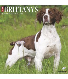 Willow Creek Brittany Spaniel Kalender 2019