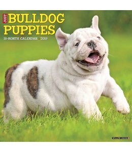 Willow Creek Engelse Bulldog Puppies Kalender 2019