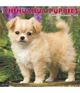 Willow Creek Chihuahua Puppies Kalender 2019