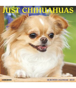 Willow Creek Chihuahua Kalender 2019