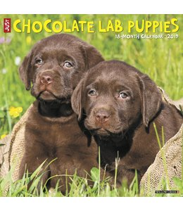 Willow Creek Labrador Retriever Bruin Puppies Kalender 2019