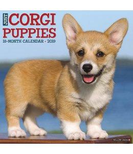 Willow Creek Welsh Corgi Puppies Kalender 2019