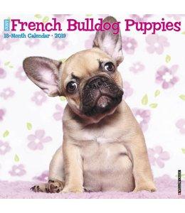 Willow Creek Franse Bulldog Puppies Kalender 2019