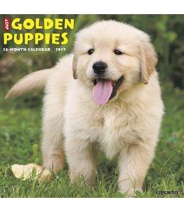 Willow Creek Golden Retriever Puppies Kalender 2019