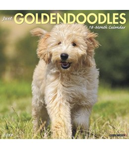 Willow Creek Goldendoodle Kalender 2019