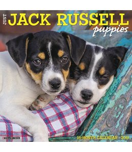 Willow Creek Jack Russell Terrier Puppies Kalender 2019