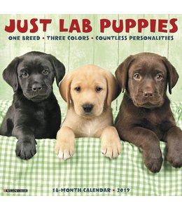 Willow Creek Labrador Retriever Puppies Kalender 2019
