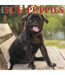 Willow Creek Mopshond Puppies Kalender 2019