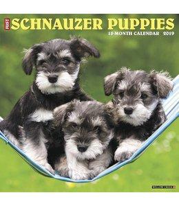 Willow Creek Schnauzer Puppies Kalender 2019