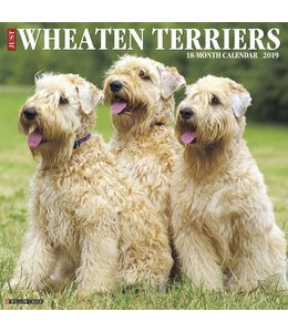 Willow Creek Softcoated Wheaten Terrier Kalender 2019