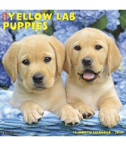Willow Creek Labrador Retriever Blond Puppies Kalender 2019