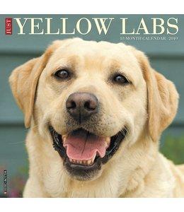 Willow Creek Labrador Retriever Blond Kalender 2019