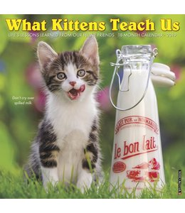 Willow Creek What Kittens Teach Us Kalender 2019