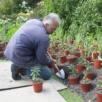Great Dixter Plantschopje