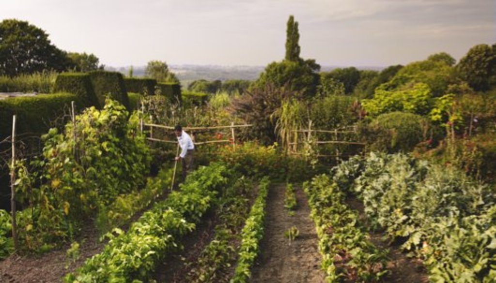 Gardens Illustrated Reader Event: Plot to plate in the kitchen Garden at Great Dixter