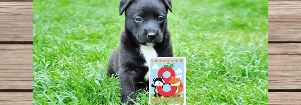 Hond 8 weken