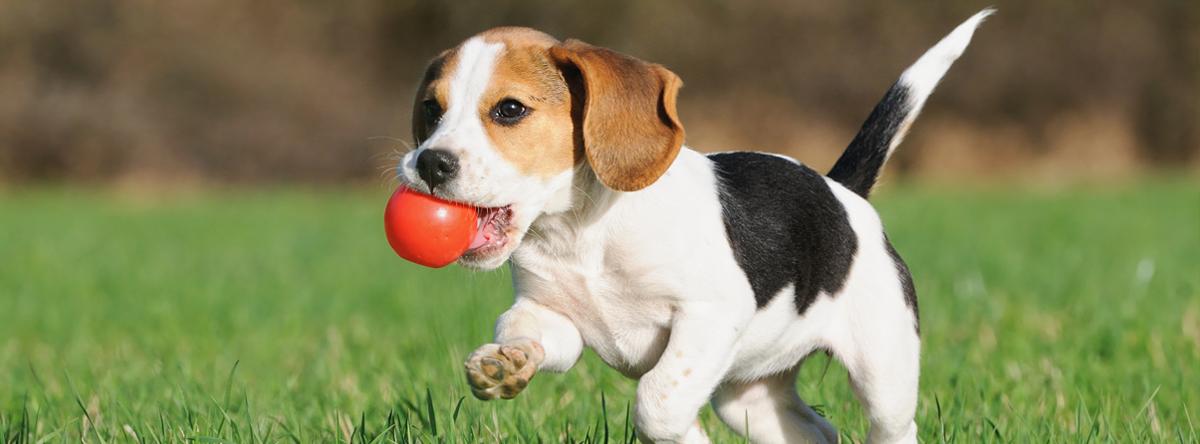 Puppy met bal