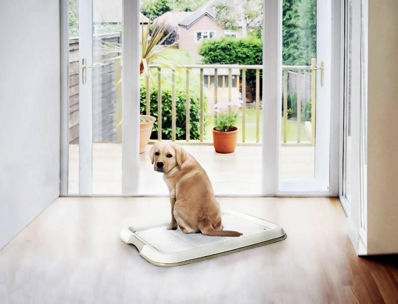 Blog over puppy trainingstoilet