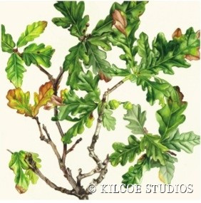 Kilcoe Studios 6 pack of greeting cards- Irish Trees