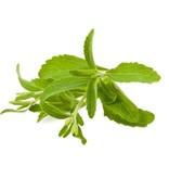 Steviahouse Stevia zaden in zakje circa 20 stuks