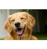 Aromed blære til hunde med blæreproblemer