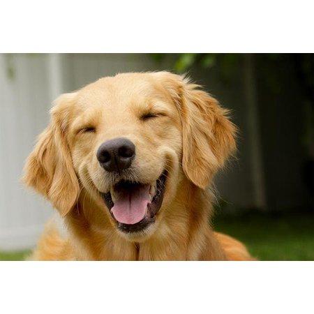 Aromed Hond blaas spray 50 ml