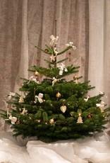 Die kleine Feine 1,00 - 1,25 m  in Creamy Christmas